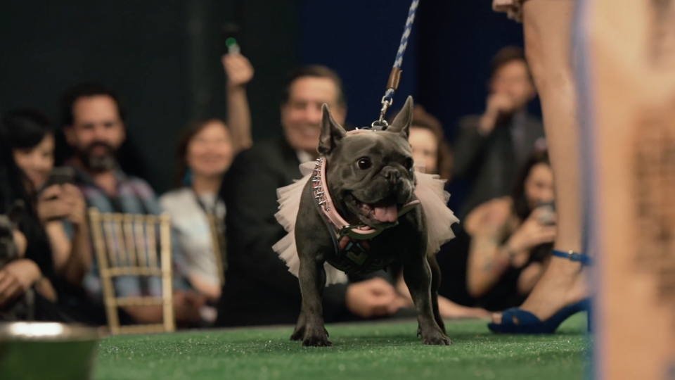 The Rescue Dog Runway Show